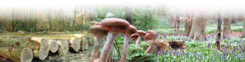 Biodiversité et production en forêt visuel