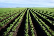 Terres agricoles