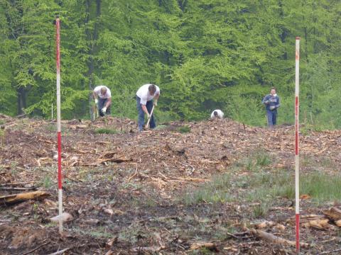 Plantation forestiere