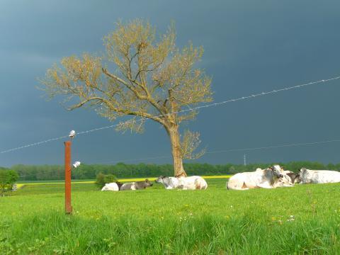 Photo paysage agricole (c) Marie Anne de Munck
