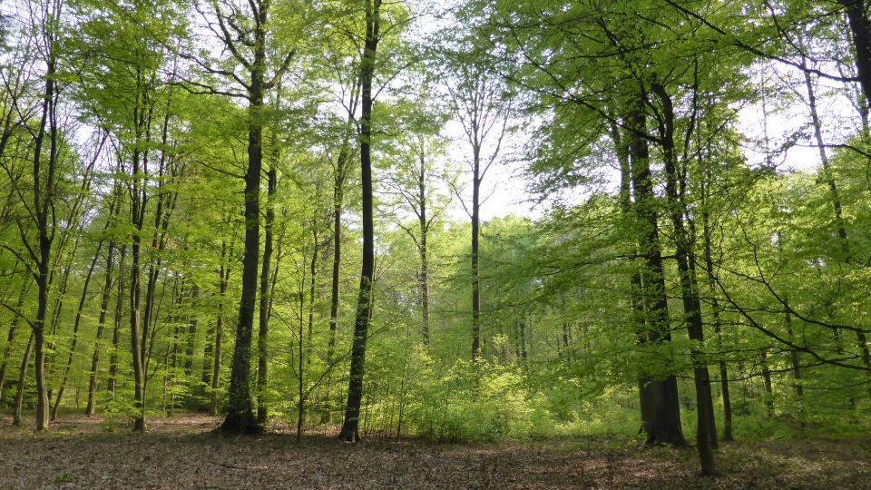Forêt 1